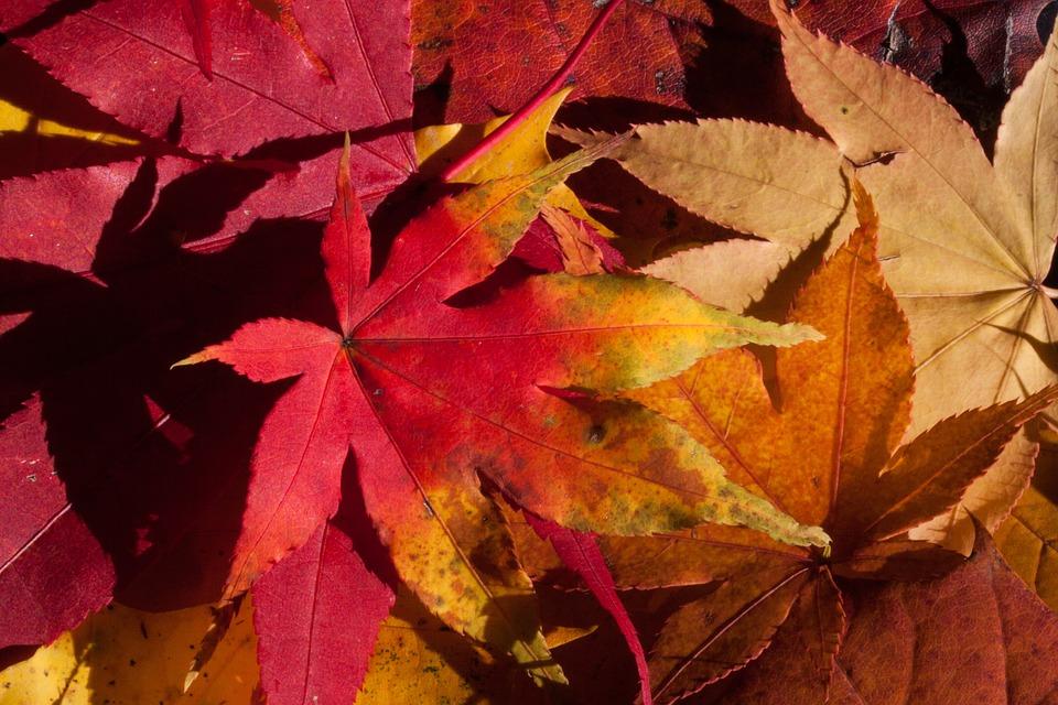autunno-5