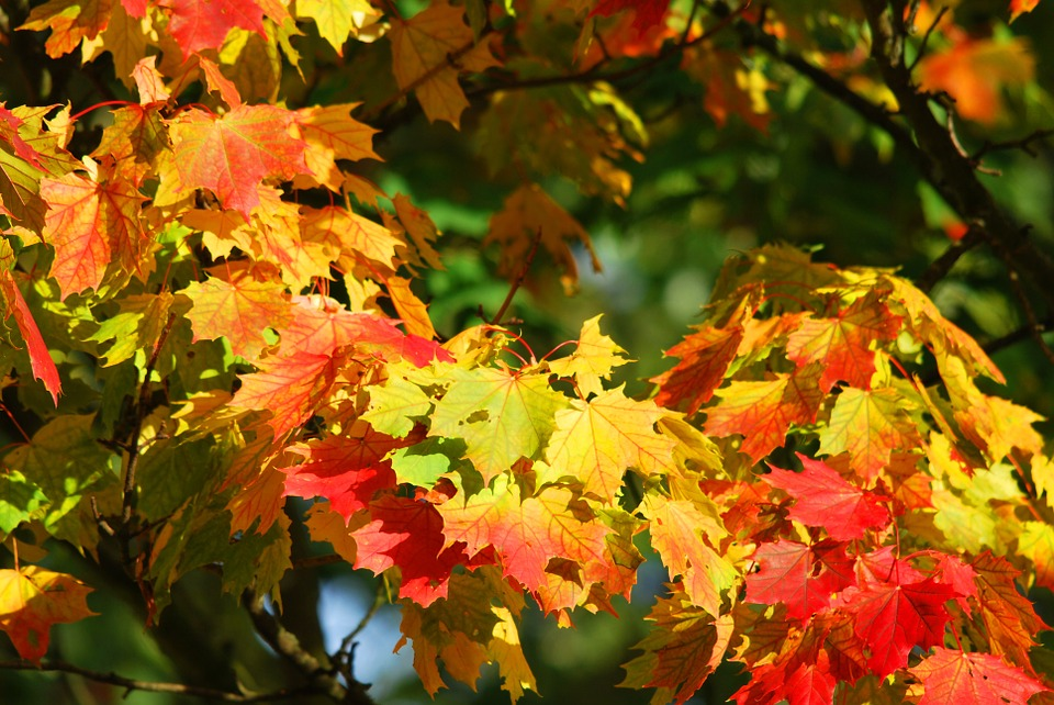 autunno-6