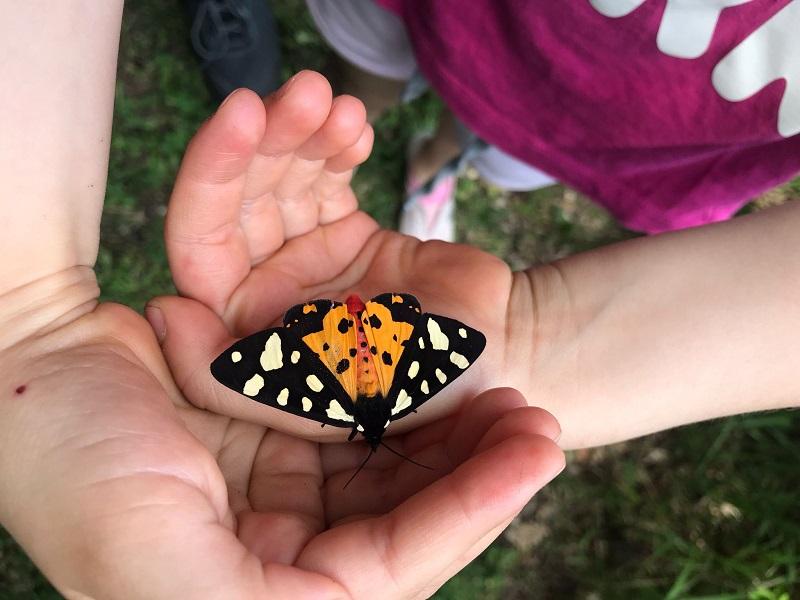 Giardino delle Farfalle a Montalto di Cessapalomb
